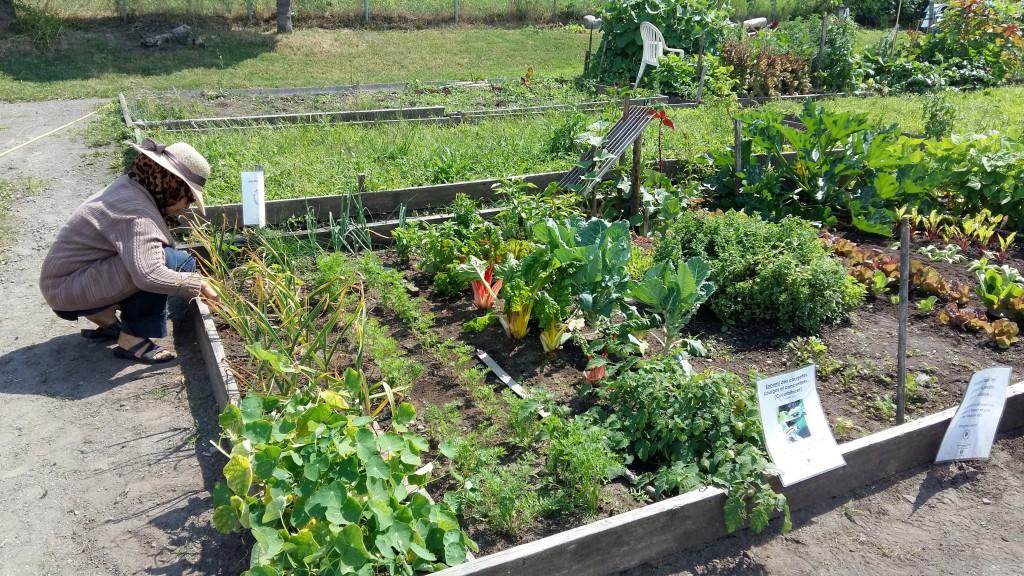 Jardins collectifs 2